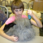 Emma Durrill grooming an Angora rabbit.