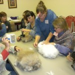 Kathleen showing her class how to pluck or comb an Angora rabbit.